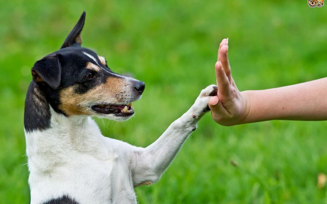 Come Comunichi con il tuo Cane?