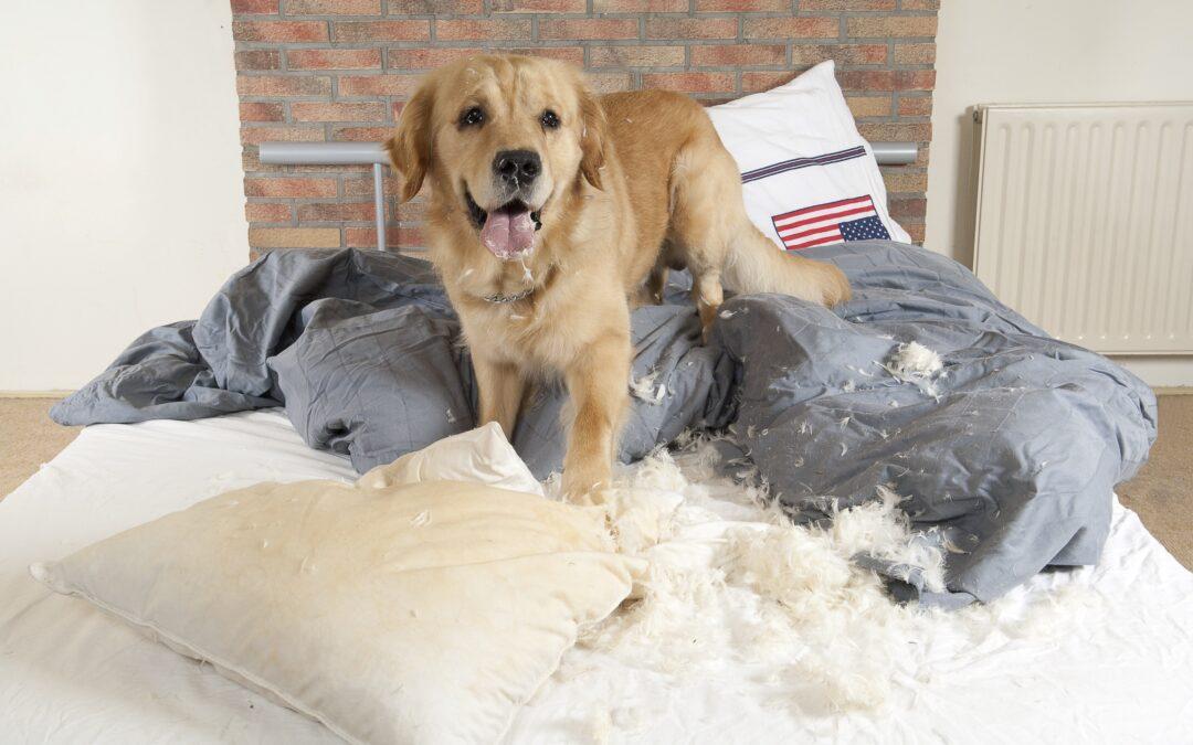 10 Consigli per calmare un cane agitato