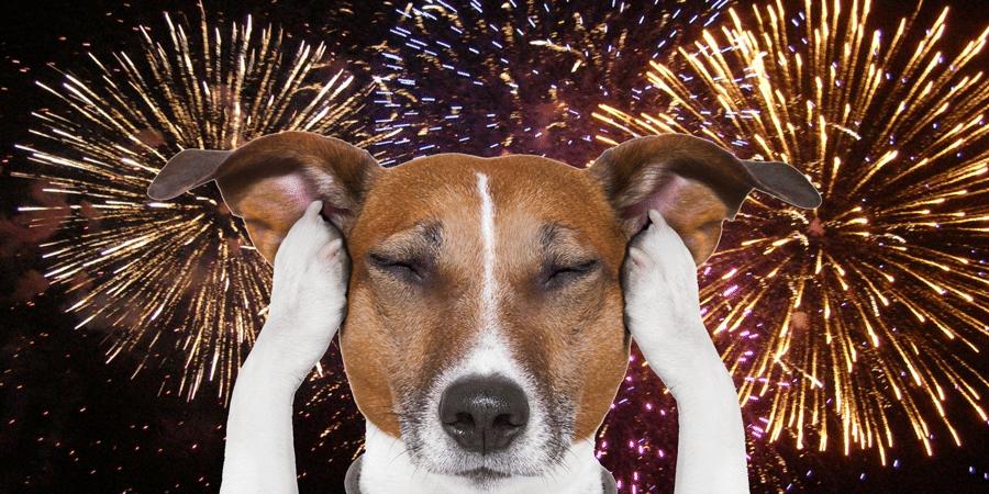 Botti di Capodanno, un incubo per cani e gatti: come aiutarli