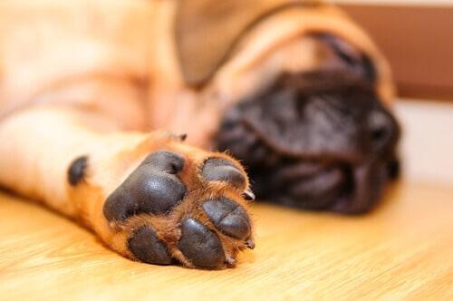 Come pulire le zampe del cane al rientro dalla passeggiata