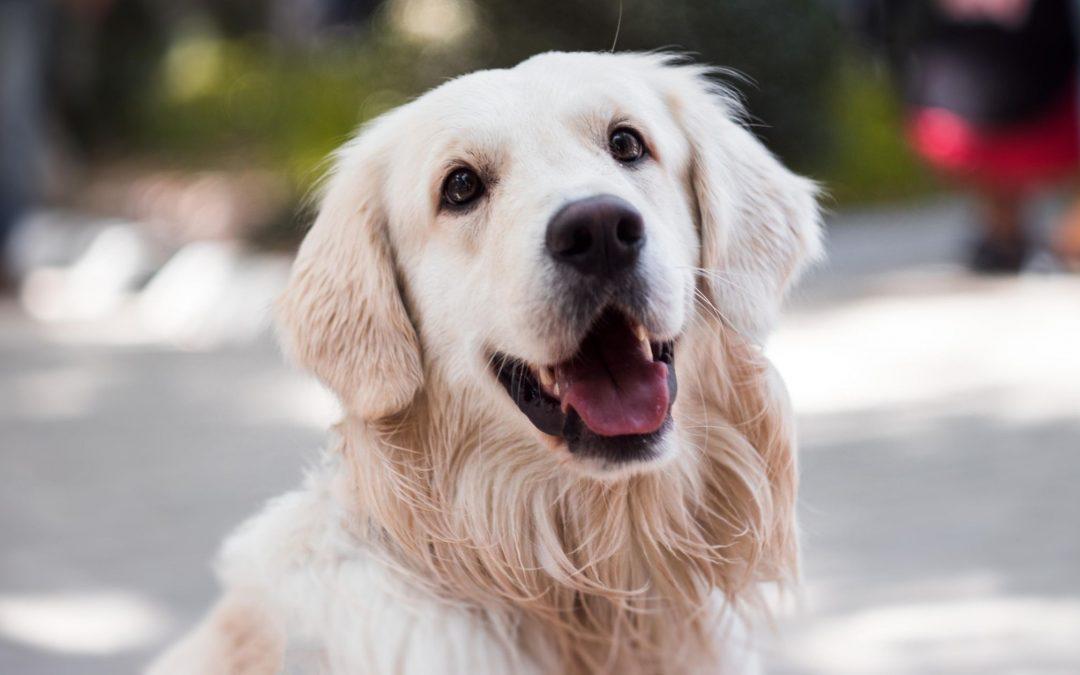 come capire se un cane è stressato