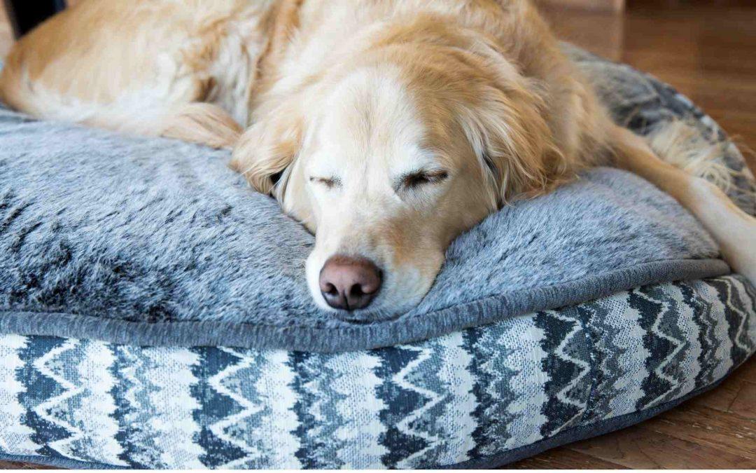 Sai Disinfettare la cuccia del tuo cane? Ecco gli errori comuni