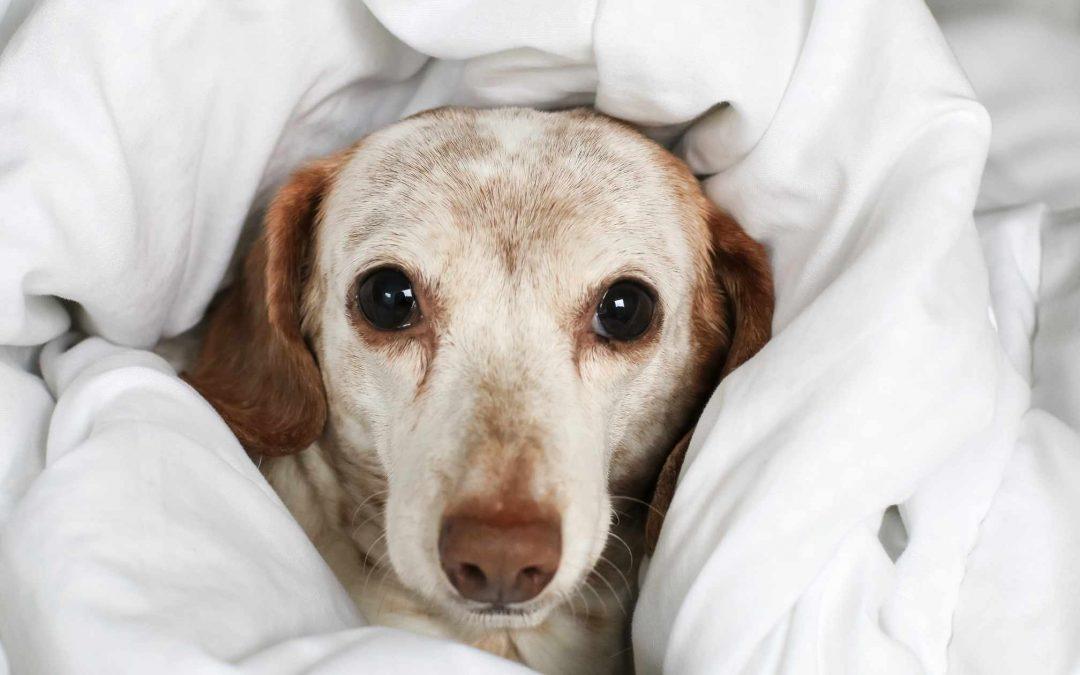 proteggere il cane dai rumori