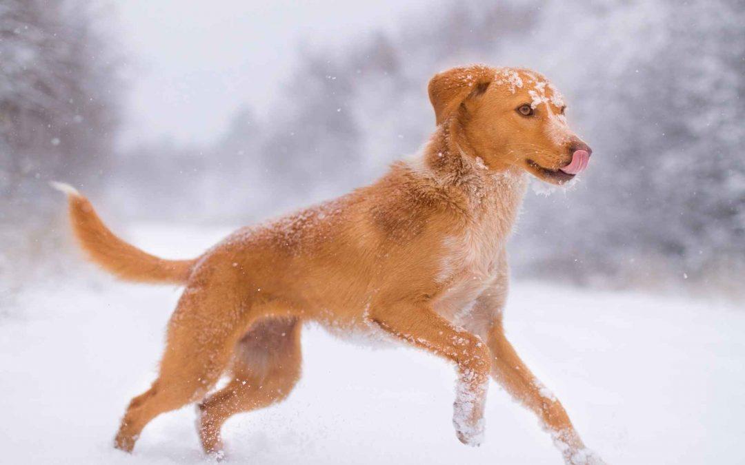 Portare il cane in Montagna – Alcuni consigli per il suo benessere