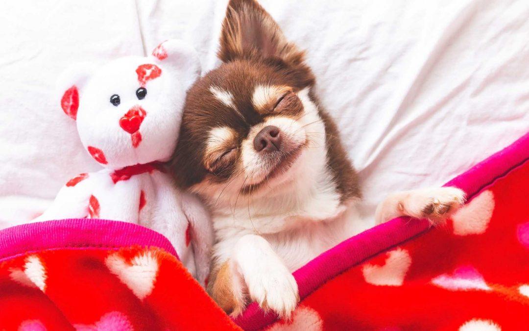 Le posizioni in cui dormono i nostri cani e i loro significati